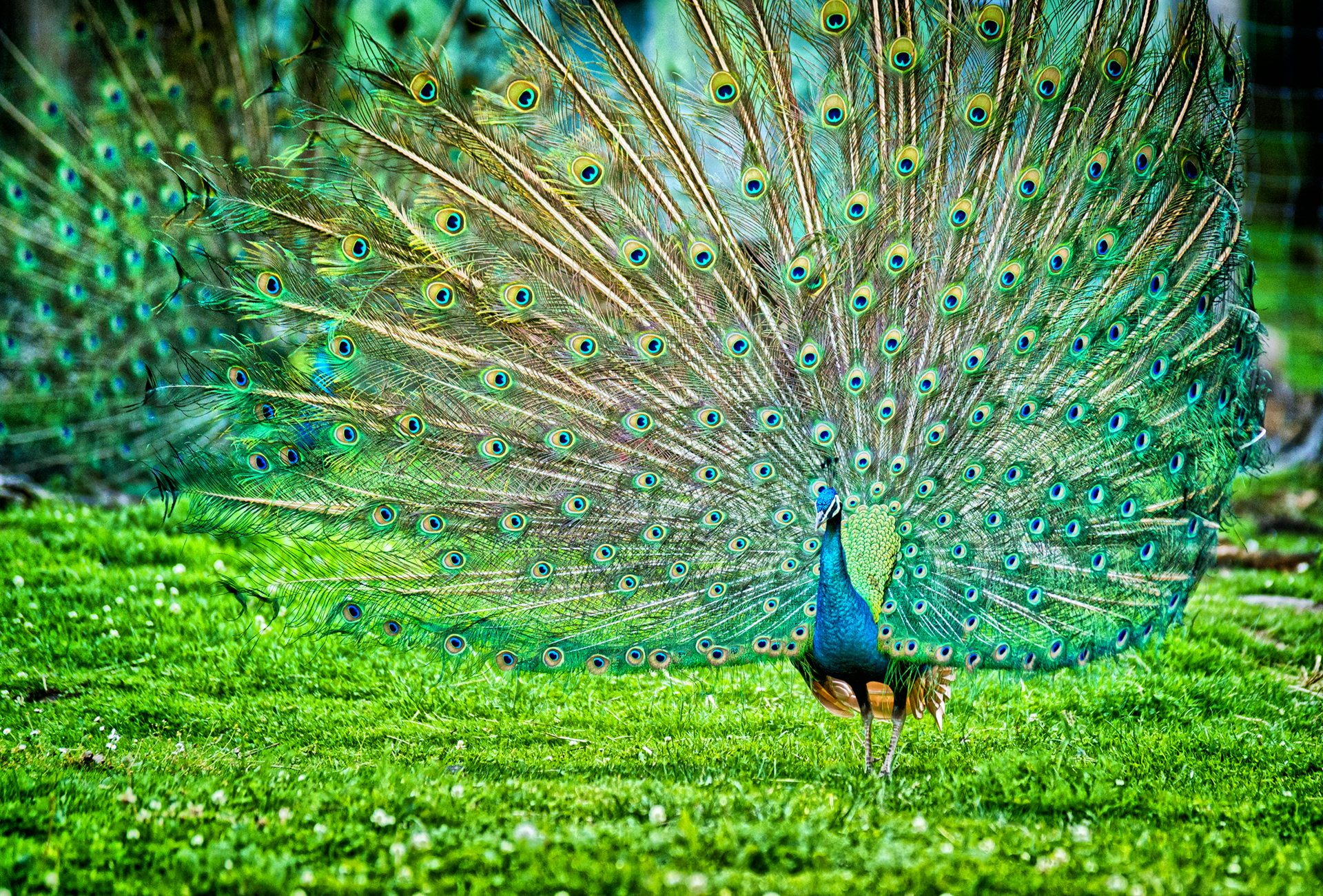 Indian birds photos and information Birds of the Indian Ocean Islands: Madagascar, Mauritius
