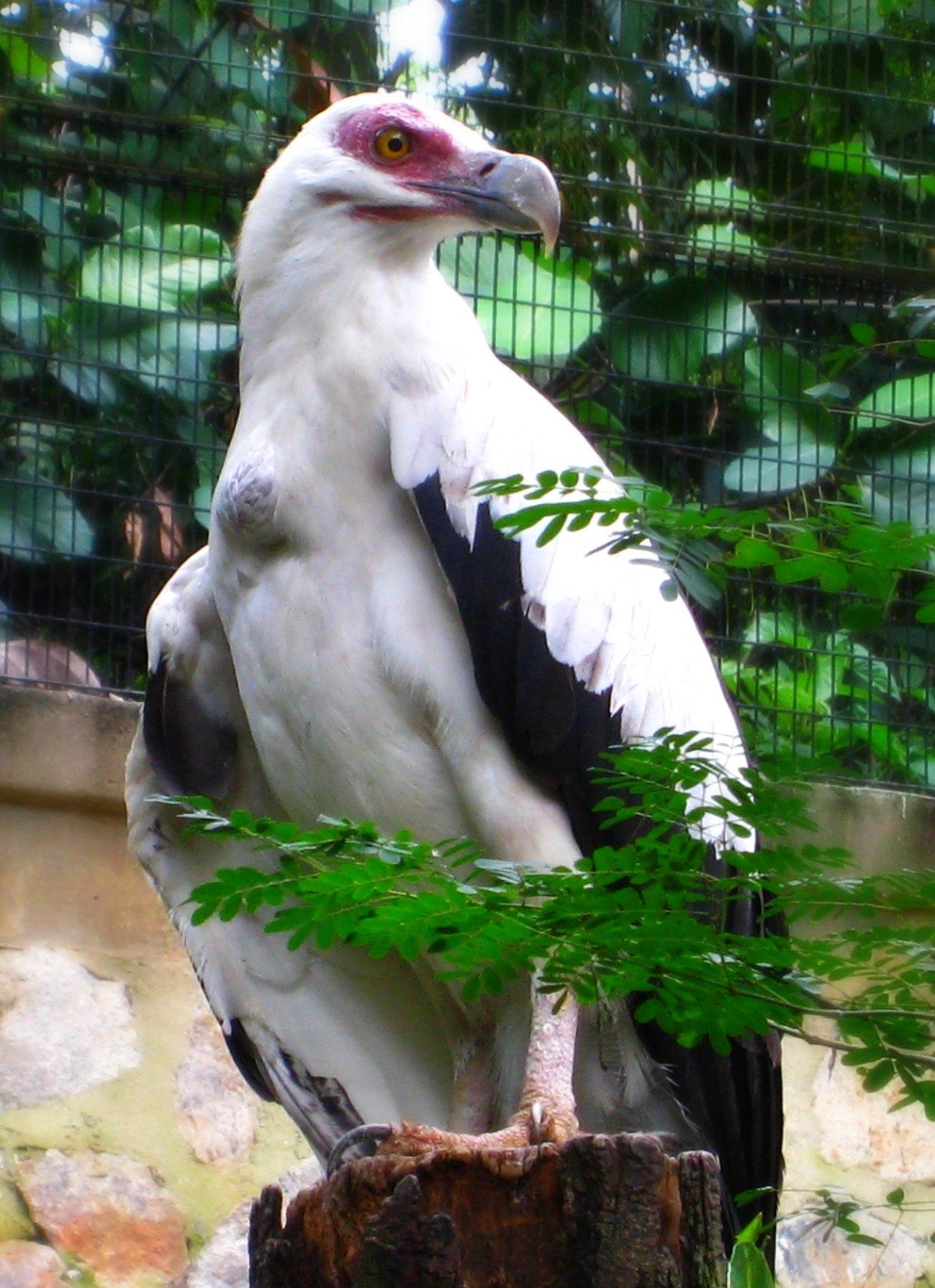 Пальмовый гриф фото