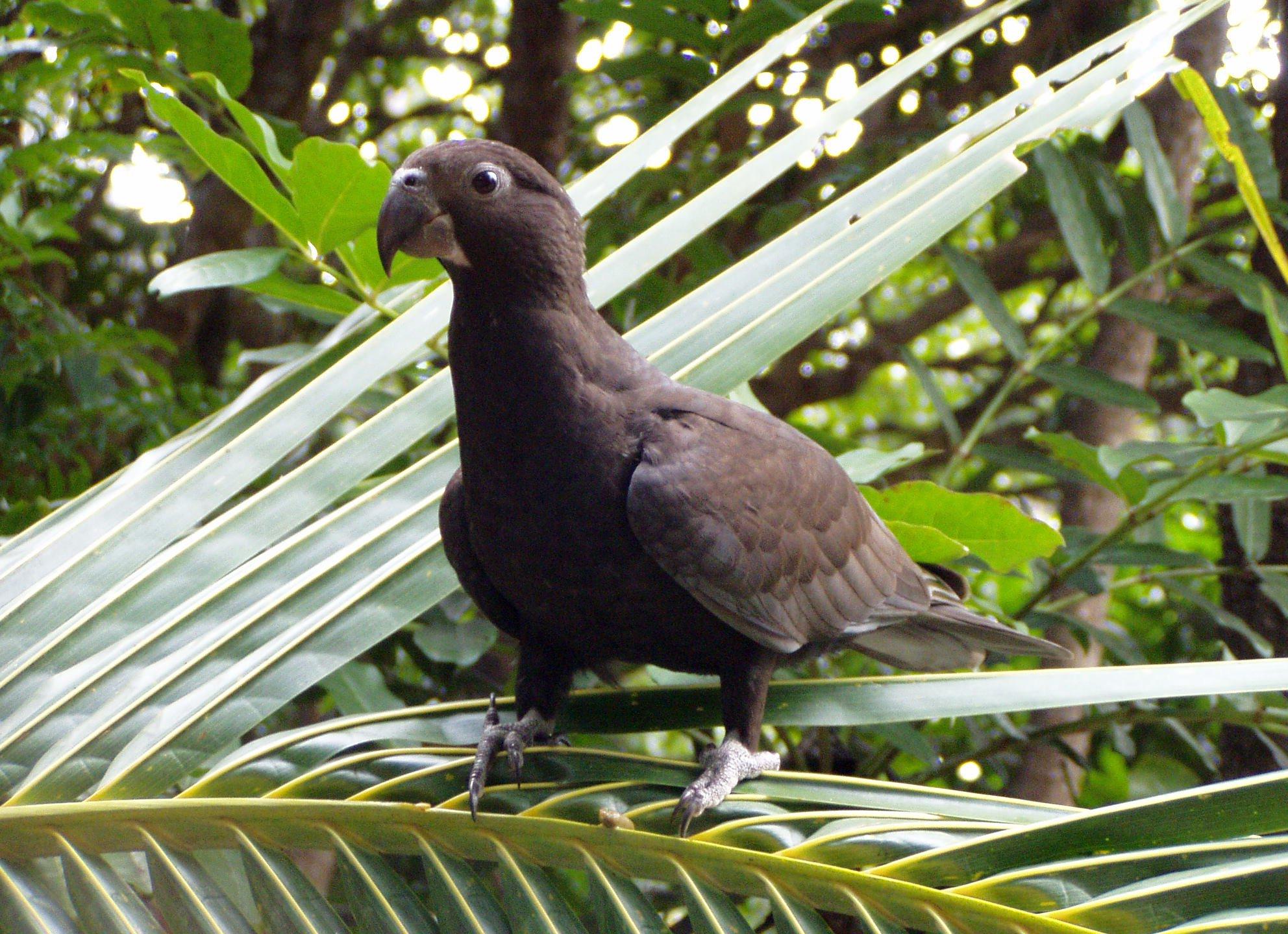 Большой попугай-Ваза фото