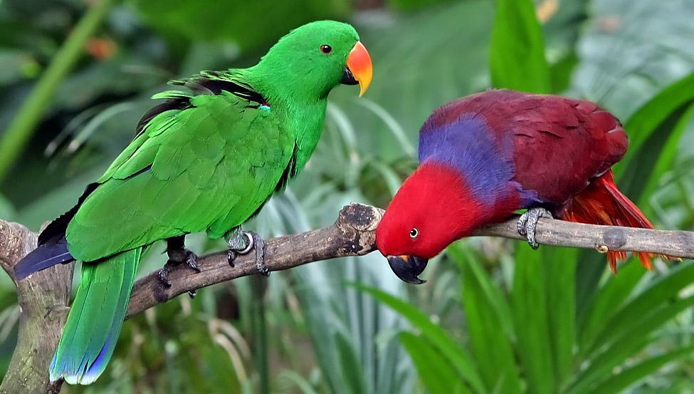 Благородный зелёно-красный попугай фото