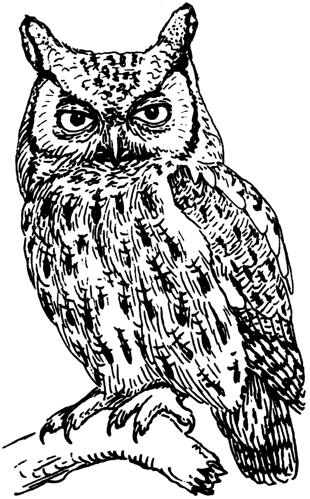 Папуанская сова фото