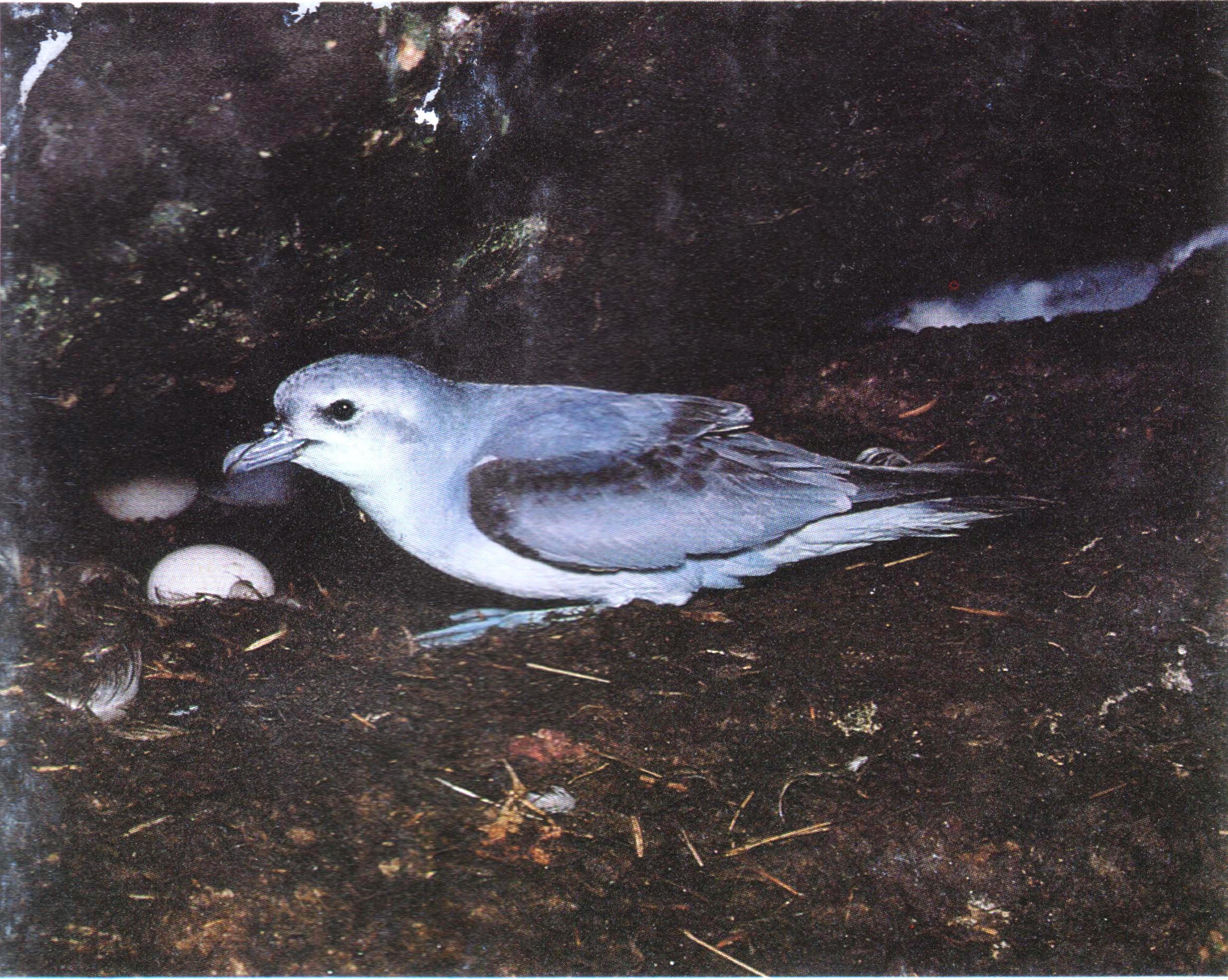 Снеговая китовая птичка фото