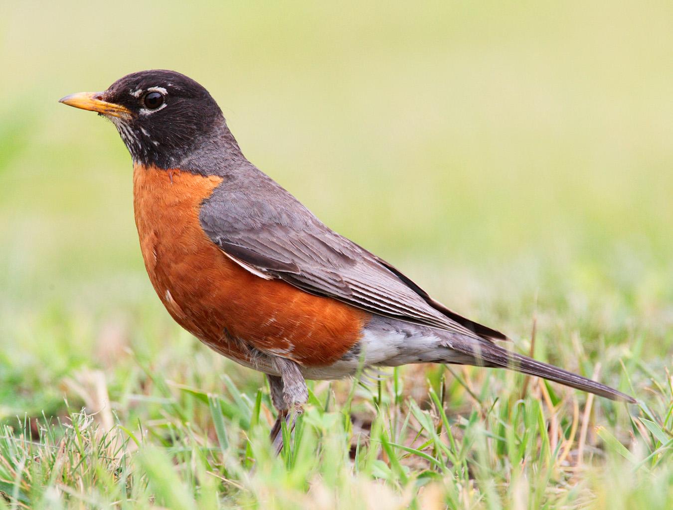 Фото птиц в высоком разрешении