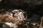 Абиссинский козодой в пещере
