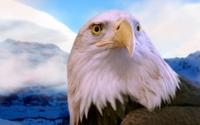 Белоголовый орлан возле горы обои