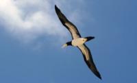 Красивое фото птицы