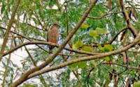 Красивые фото птицы