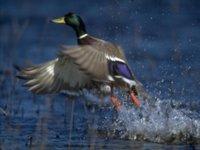 Красивое фото птиц
