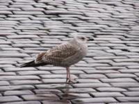 Изображения птицы