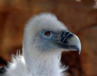 Фотография птицы