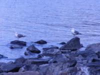 Фотографии птицы