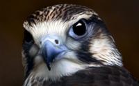 Портрет птицы обои