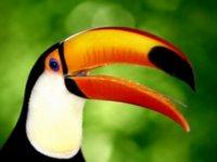 Рисунок с птицей