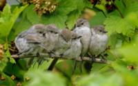Птицы на ветке обои