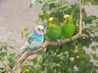 Картинка с птицами