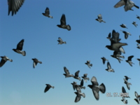 Изображение птиц