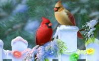 Кардиналы на Рождество обои
