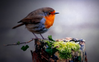 Птица-шар обои
