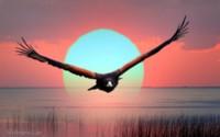 Орел и солнце обои