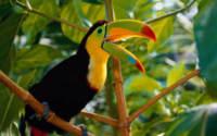 Экзотический попугай обои