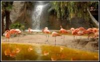Фламинго возле желтой реки обои