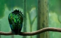 Зеленая птица на ветке обои