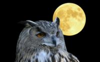 Лунный филин обои