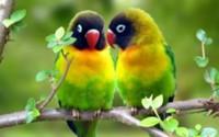 Красные попугаи обои