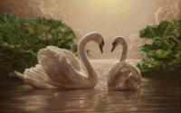 Два лебедя обои
