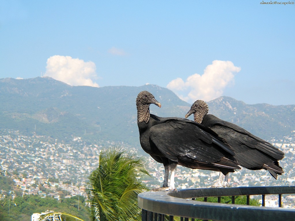 Фоны с птицей