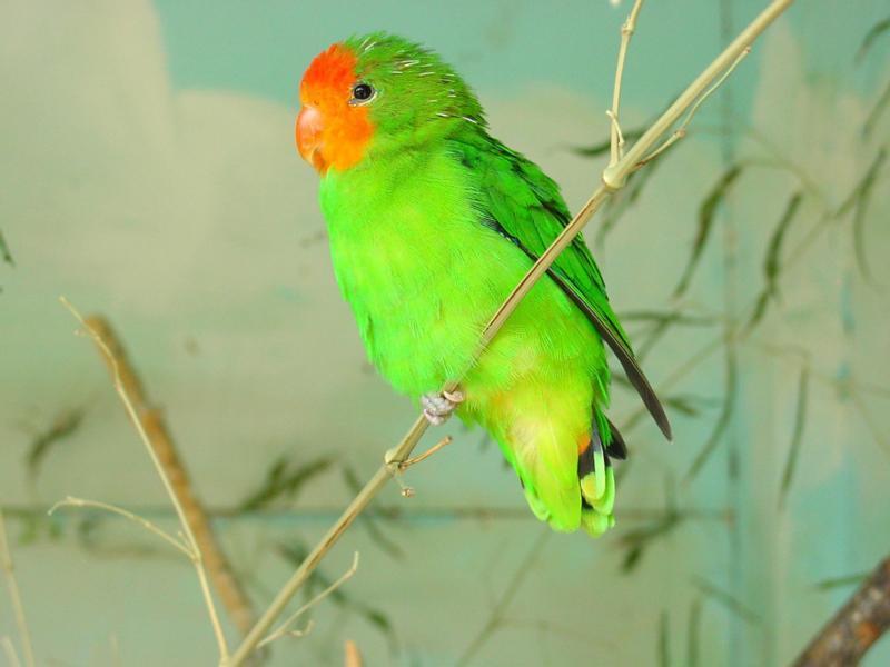 Фото птицы