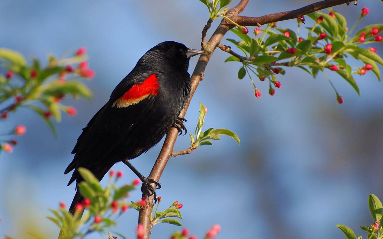 Фото синяя птица