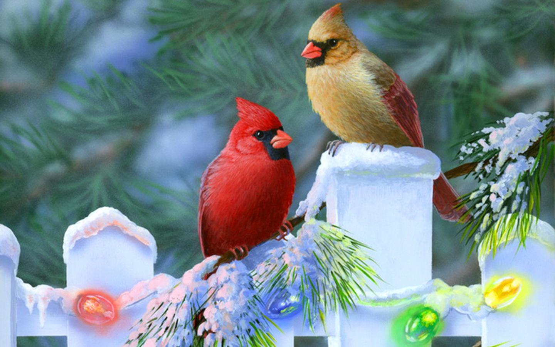 Рождественские кардиналы обои