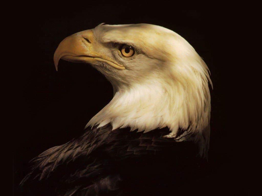 Орел на черном фоне обои