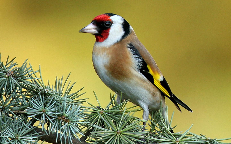 картинки птиц на дереве карандашом