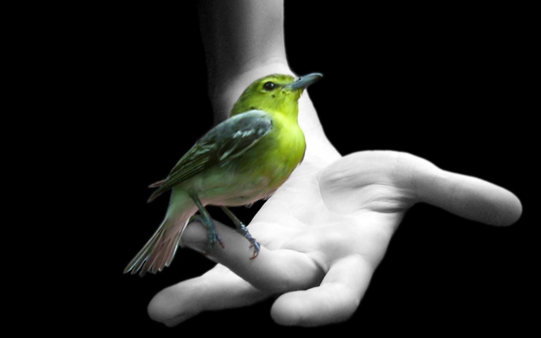 Зеленая птица на руке обои