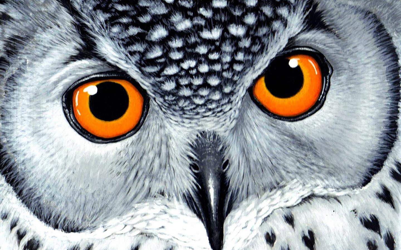 Филин с оранжевыми глазами обои